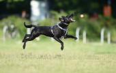 Hund KING am 13. Juli 2021 (© schwartz photographie)